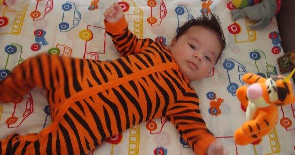 david-tigrut