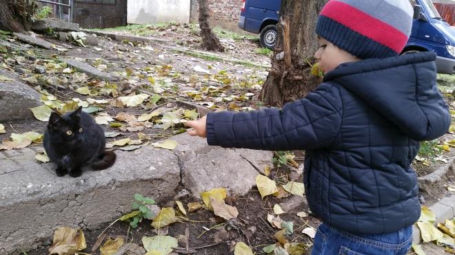 david-si-pisica-2