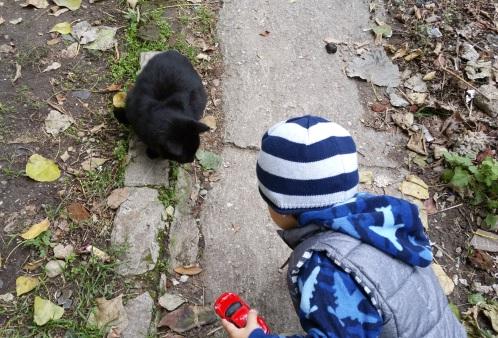 david-si-pisica-neagra