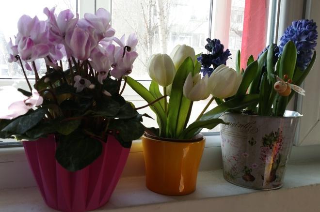 flori-la-ferestre